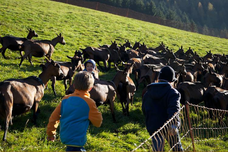 Auf der Ziegen-Weide